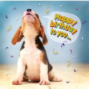 Depesche 3D Foto Klappkarte quadratisch 004 Happy Birthday to you...